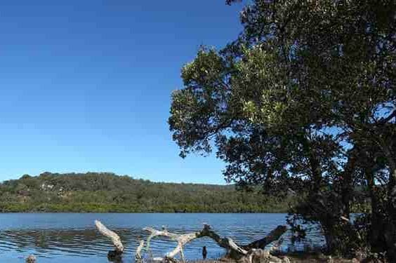 Yallambee Village Water Sedge